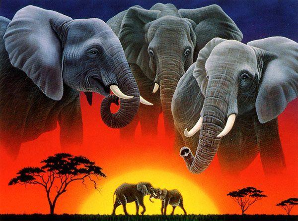Eléphant d' afrique